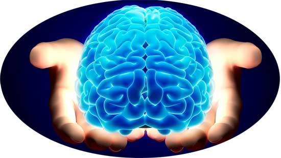 cách dùng hạt chia tốt cho não