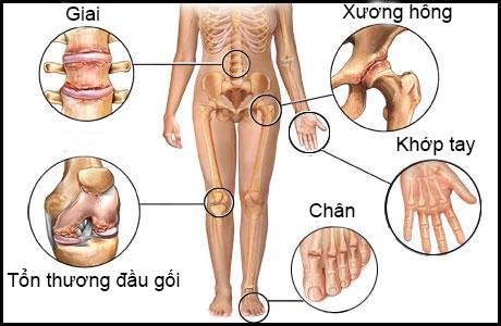 Công dụng của hạt chia đối với xương khớp